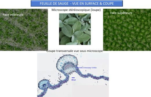 7 - Atelier Microscopie 18 01 2018