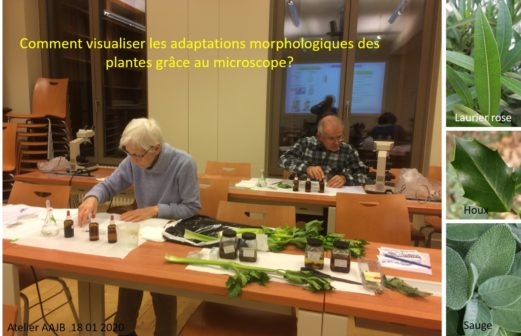 5 Atelier Microscopie 18 janvier 2018