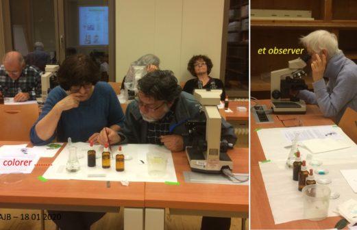 6 - Atelier Microscopie 18 janvier 2018