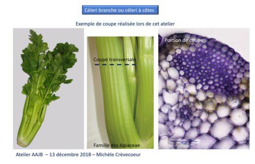 8 - Atelier Microscopie 18 janvier 2018