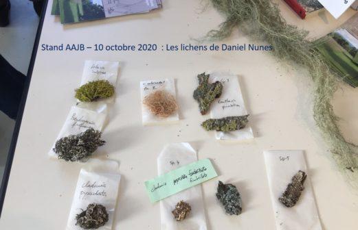 4 - Les lichens de Daniel Nunes