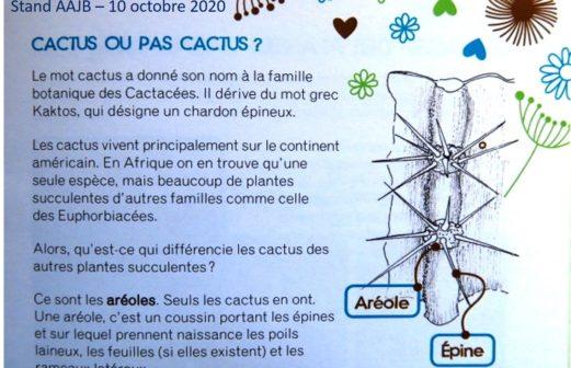 5 - Cactus ou pas cactus